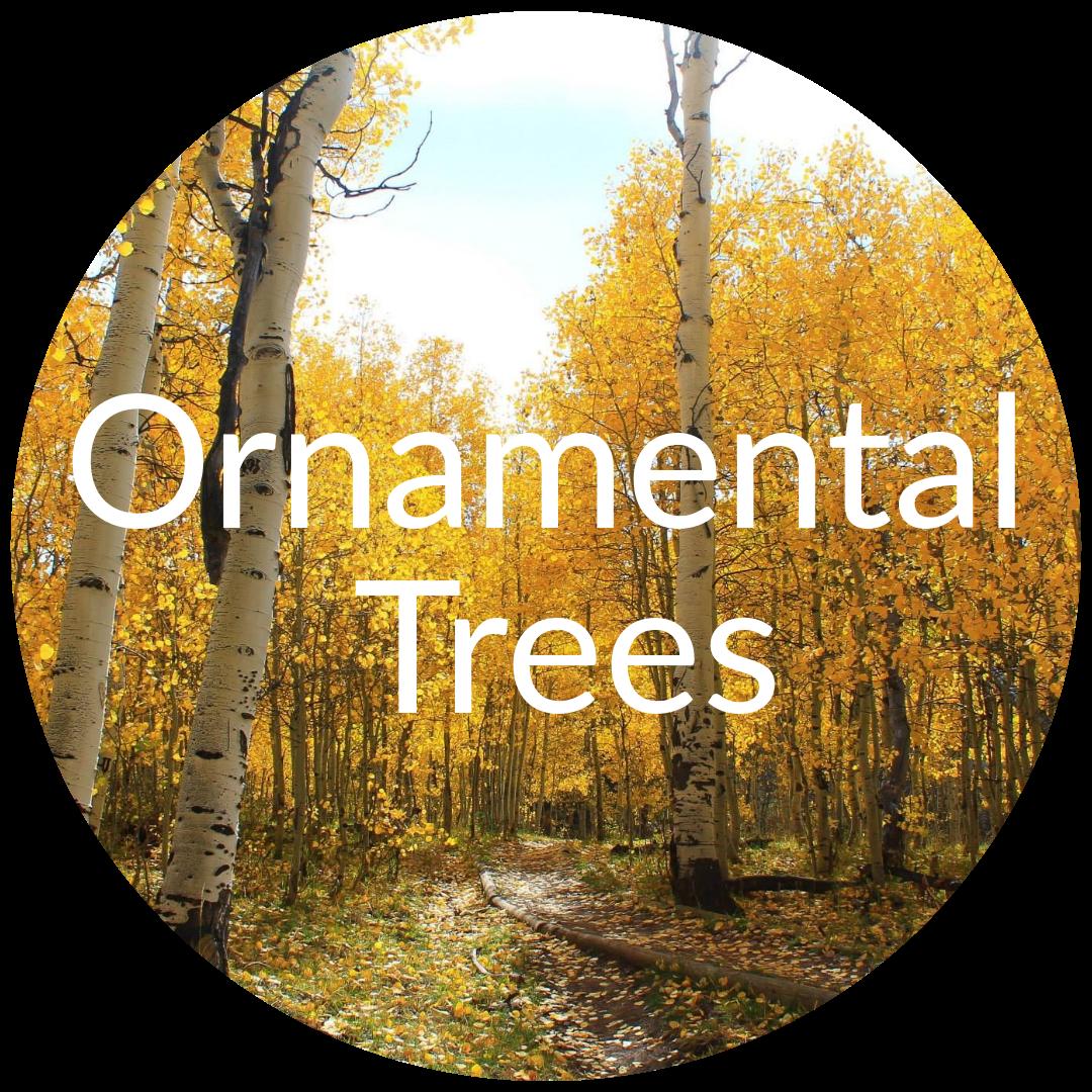 Ornamental Trees for Sale in Colorado