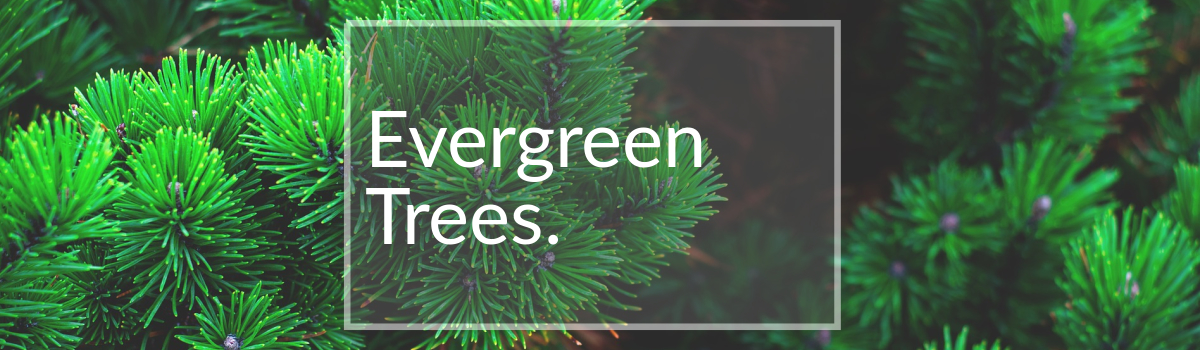 Evergreen Trees for Sale Colorado
