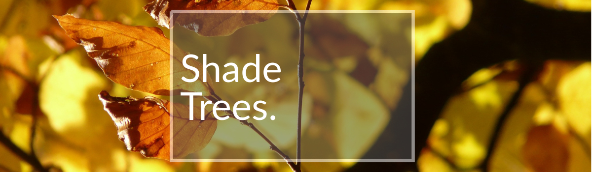 Shade Trees for Sale Colorado