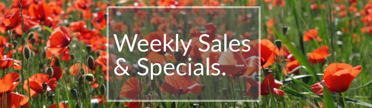 Large Tree Weekly Sales Colorado