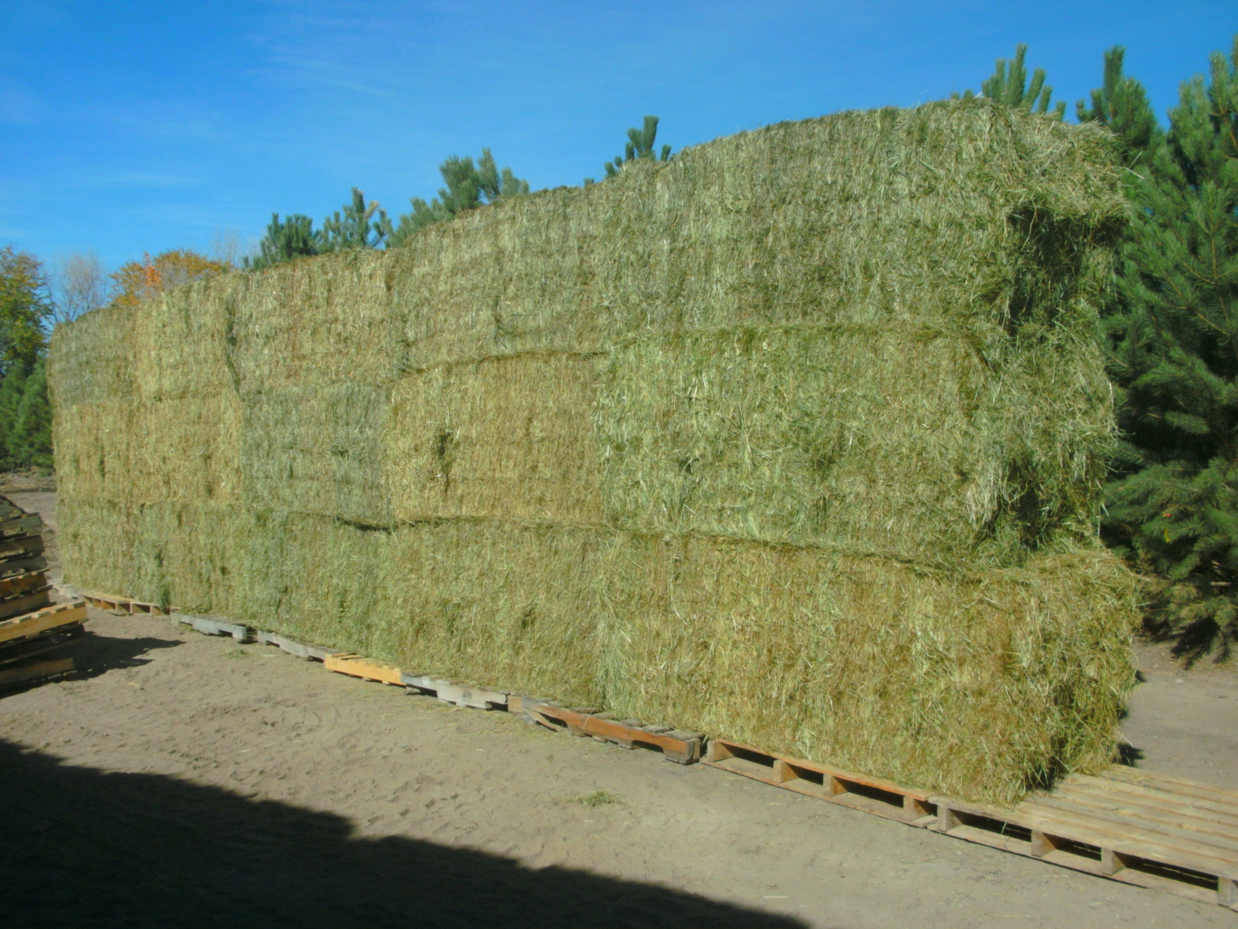 Mountain Timothy Horse Hay